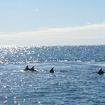 avvistamento delfini in navigazione