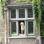 Caroline's dog Fidele in the window of the Inn