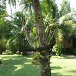 Trädgården på Tropicana, Koh Chang