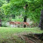 Deer near the lake