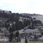 Olajfák-hegye
