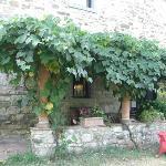 夏はブドウ棚の木陰で本を読むのも贅沢な時間です
