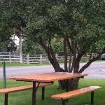 We had our morning coffee at the picnice table by the lilac tree, which was next to our room.