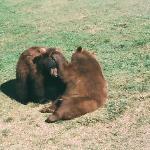 Cubs at play Babyland