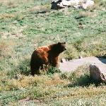 Brown Bear Babyland