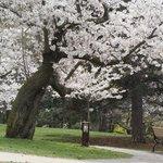 Photo de High Park