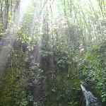 Sunlight shining down upon Backbone Rock Waterfall & Forest
