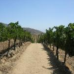 An easy trail among the vines