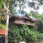 The tree hut. Beautiful Place.