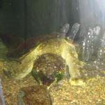 Surprise Aquatic Center Foto
