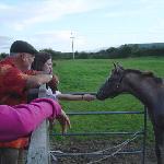Pferde in der Nachbarschaft