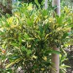Garden of the Groves Freeport Grand Bahama