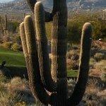 Photo of Troon North Golf Club