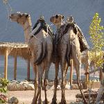 Camels - Lovely and part of the experience