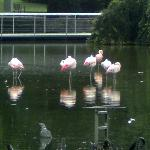 The Flamingos at the park.