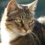 Jack - top Cinco cat