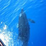 Avvistamento delfini ritorno da Lampione
