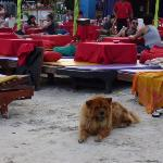 A Chow Chow is joining us sun bathing