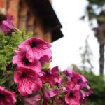 Garden Villa Albertina