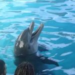 The dolphin dance jejeje