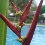 Sofitel Fiji Resort & Spa صورة فوتوغرافية
