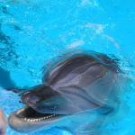 My hand reaching down to stroke my first ever dolphin - Seaworld Texas