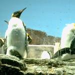 Penguins freezing(grrrrr)