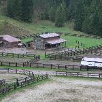 The corrals