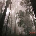 Misty Mysterious Forest