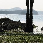 Egret on watch