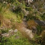 Cremorne Point to Mosman Bay Walk Photo
