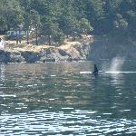 Whale at Turn Point Lighthouse