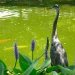 Ft. Worth Japanese Gardens