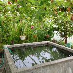 Hot springs tub in greenhouse