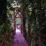 Cloud Forest bridge