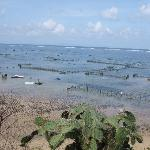 seaweed farming at the nearby Geger beach