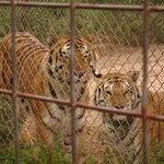 Brown's Oakridge Zoo Photo