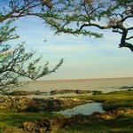 Hermosos pisajes, árboles con muchas ramas, troncos gruesos, lagunitas de agua, vegetación verde