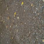 closeup of soil of tent pad.  compacted gravel
