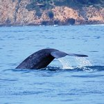 Whale Watching Trip Off Newport Beach
