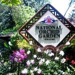 National Orchid Gardden