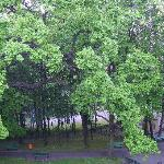 Neighbourhood Park with 300 year old trees