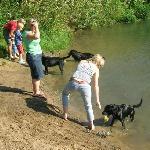 Sandy Bay - Dogs having a swim