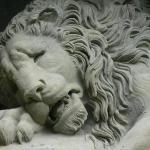 Die dying Lion van nader - sien die pyn in die ou gesiggie