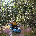 Padding through the mangroves.