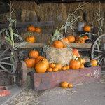 The pumpkins.