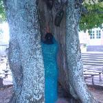 l'arbre à énergie positive