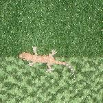 lizards out in the corridor on the 6th floor