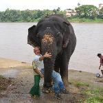 After bathing the elephants at training grounds