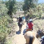 Plenty of activities, including horseback riding